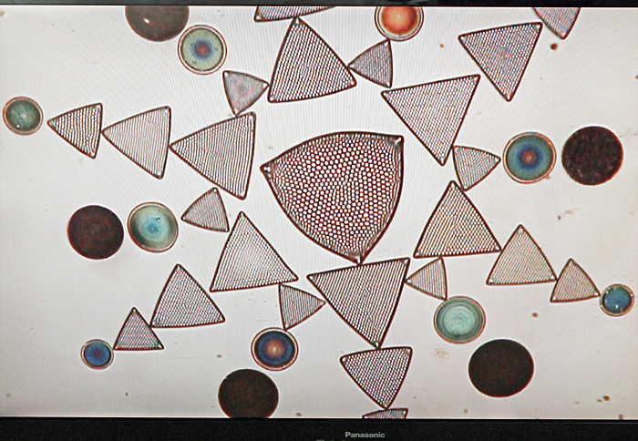 Thum diatom arrangement on television