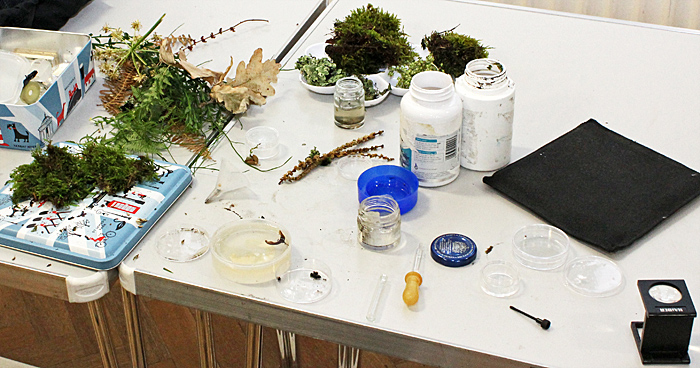 Some of Irma Irsara's specimens