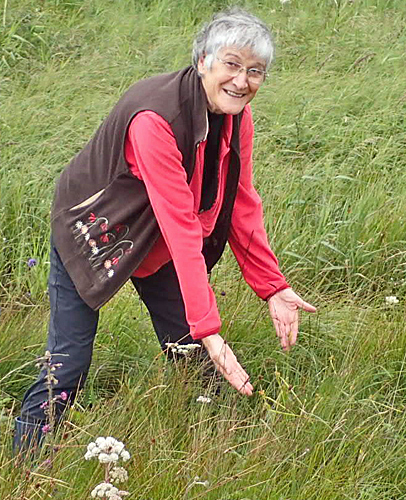 Judith Allinson with Carex flava