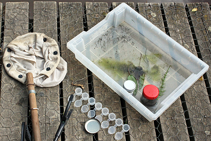 Plankton net, sorting tray and small bottles