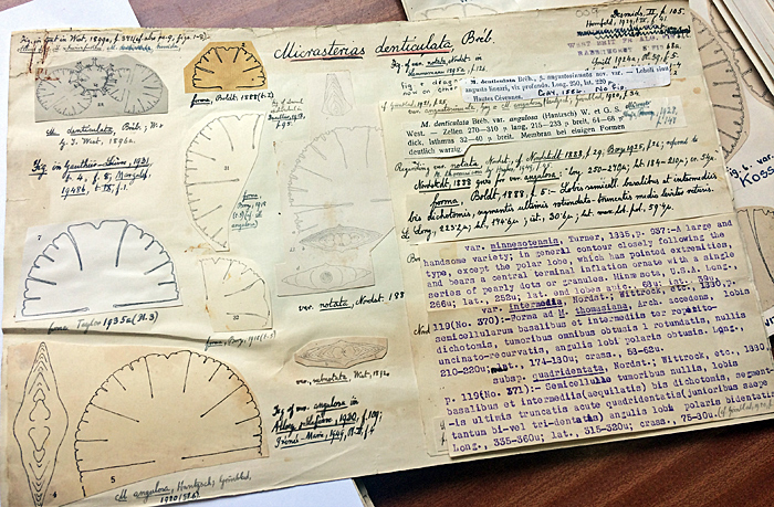 Micrasterias denticulata data sheet in Fritsch collection