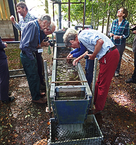 Freshwater pearl mussel tanks
