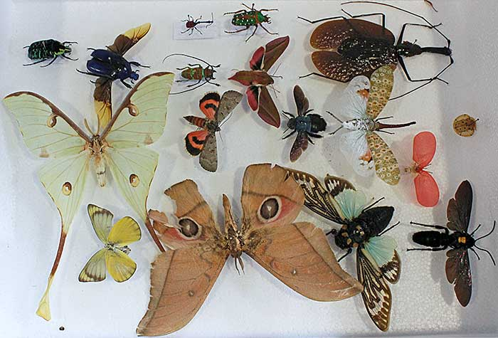 Purchased insects