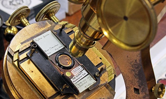 Slide by E. D. Evens on Wenham binocular microscope by R. & J. Beck