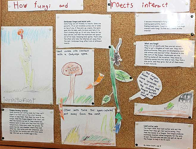 How fungi and insects interact