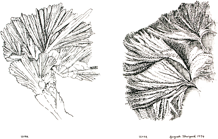 Drawings of urea crystals