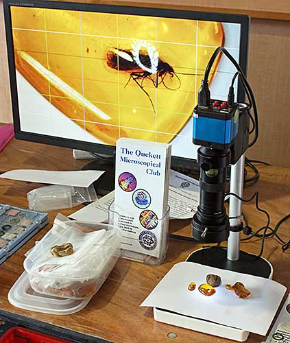 Insects in amber, under an inspection camera