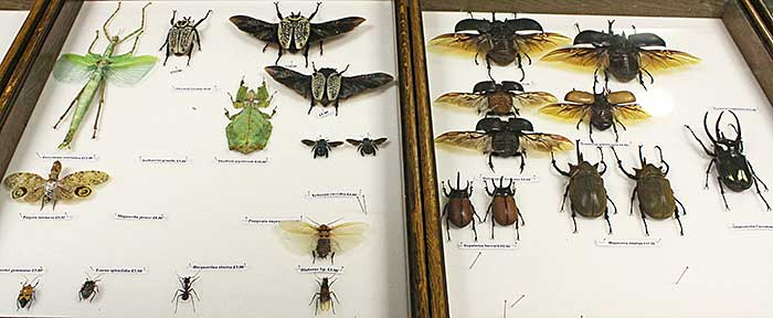 Large insects for sale