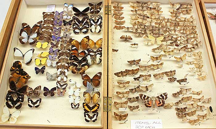 Butterflies and moths for sale