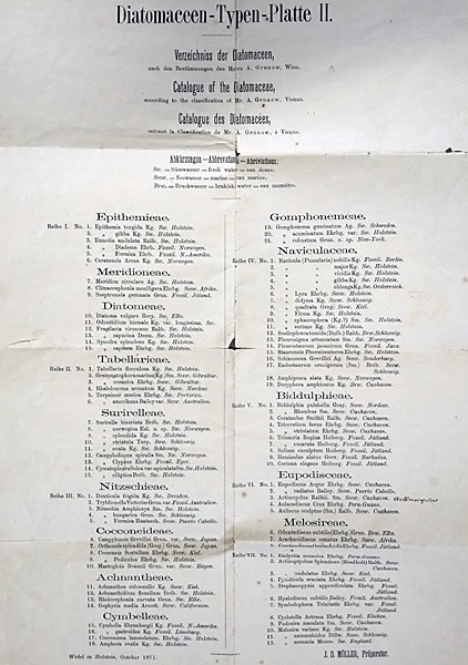 Möller diatom arrangement catalogue