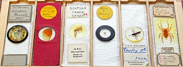 Mary Morris's slides