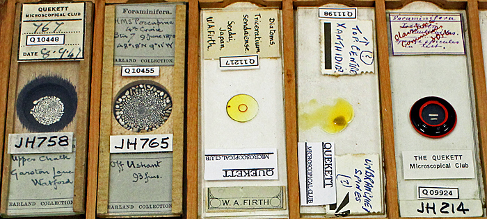 Slides of diatoms and forams