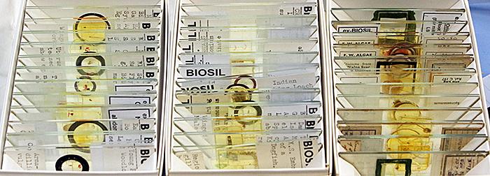 Biosil slides
