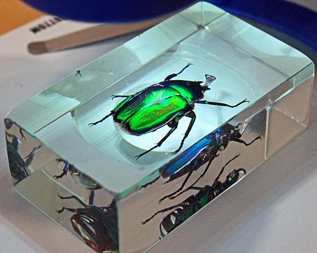 Iridescent beetle in resin