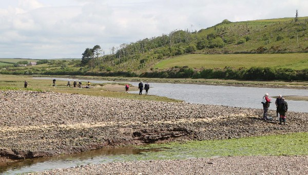 Collecting on the Gann salt marsh
