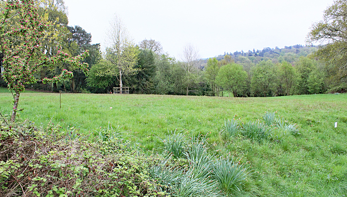 Meadow behind Haslemere Museum