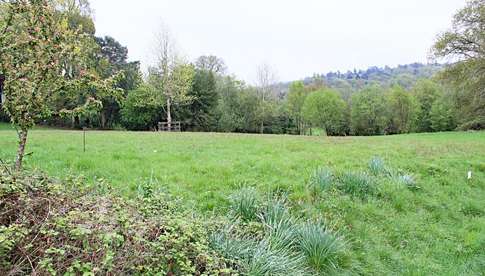 Meadow behind Haslemere Museum