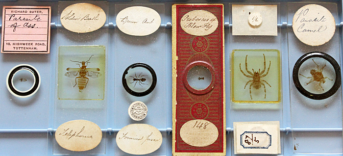 Antique slides of insects