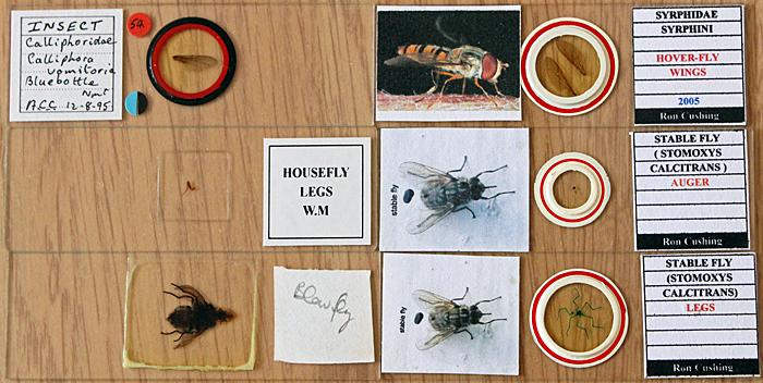Diptera slides