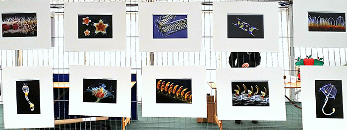 Display of photomicrographs