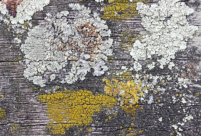 Lichens on a wooden seat
