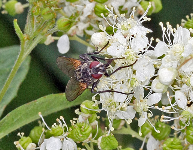Fly on flowers