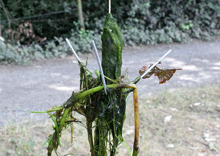 Three-pronged weed drag