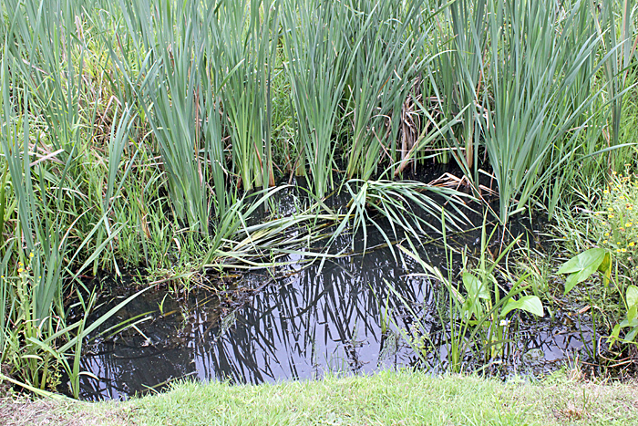 Pond in the golf course