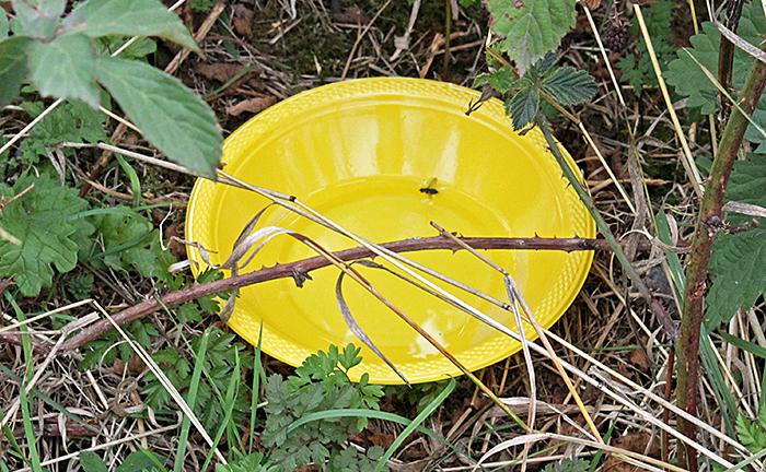 Yellow pan trap