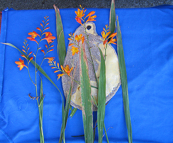 Daphnia made of sand by Alan Jones