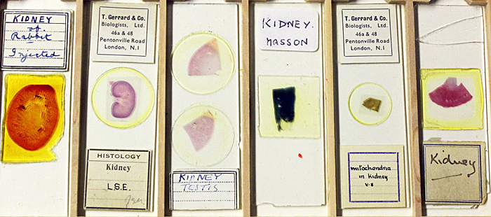 Gordon Brown's histology slides