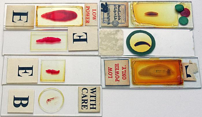 Stephen Parker's slides