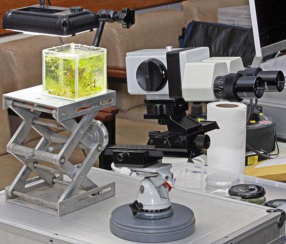 Tony Pattinson's macroscope