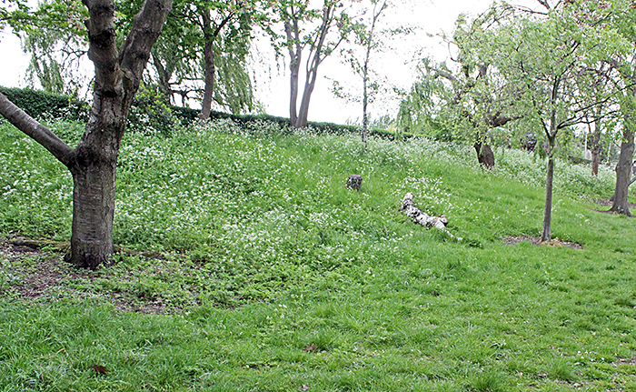 Grassy bank in Wimbledon Park