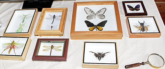 Large winged insects