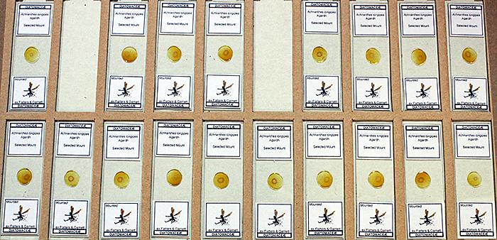 Steve Gill's diatom slides