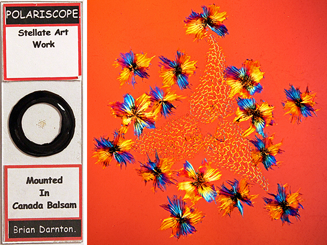 Stellate Art Work slide made by Brian Darnton