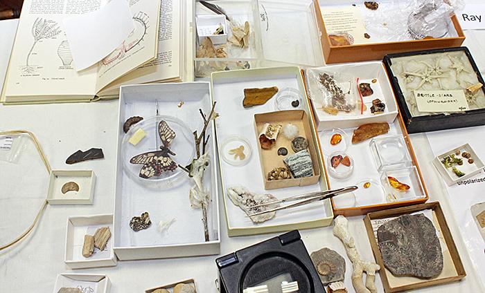 Jacquie Bainbridge's specimens