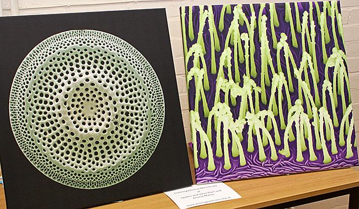 Jeremy Poole's coloured SEMs