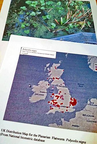 Distribution map and habitat of Polycelis nigra
