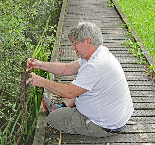 Robert Ratford collecting from the board walk