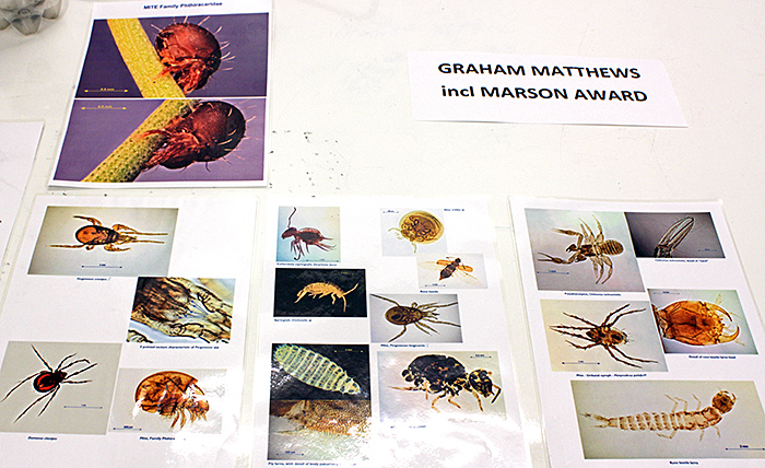 Graham Matthews' exhibit