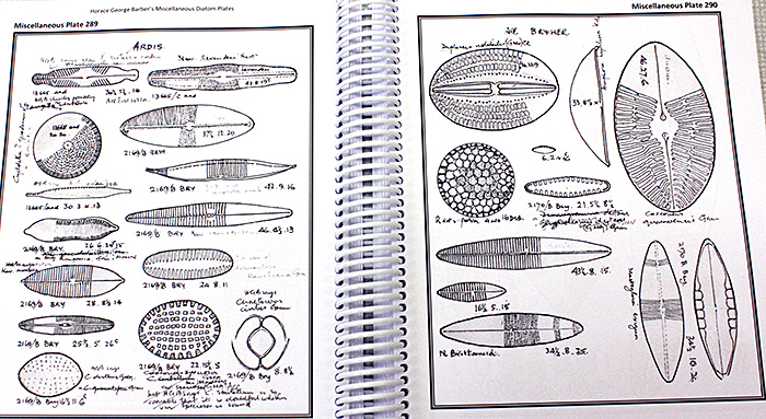 Diatom plates by Horace Barber