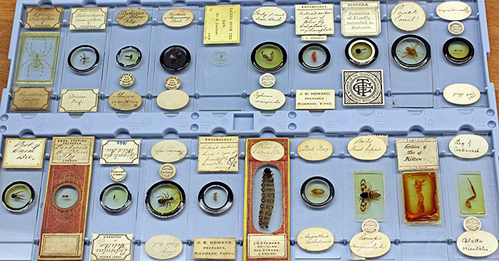 Slides of insects