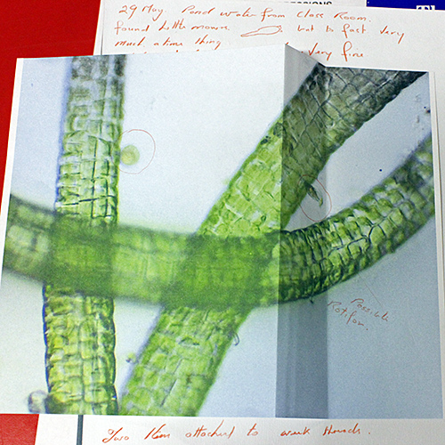 Michael Horwood's photomicrograph