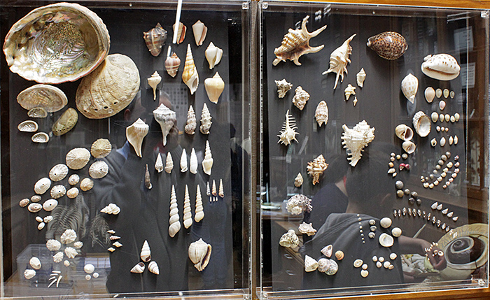 Display of shells