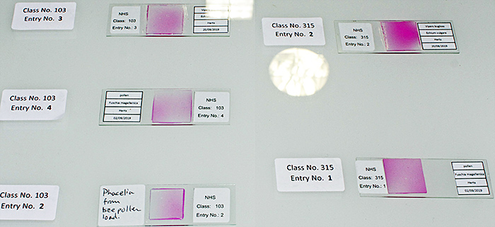 Entries in the microscope slide competition