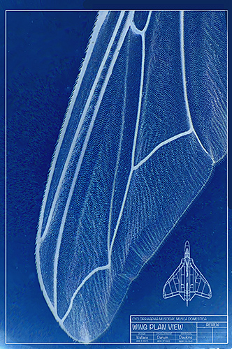 Fly's Wing Blueprint by Tom Harnish