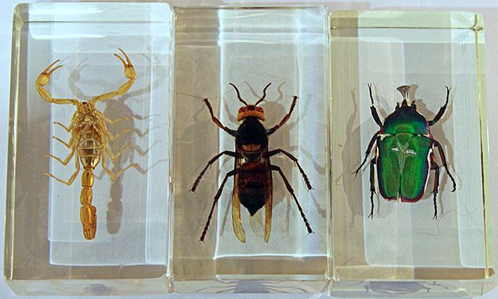 Arthropods embedded in resin
