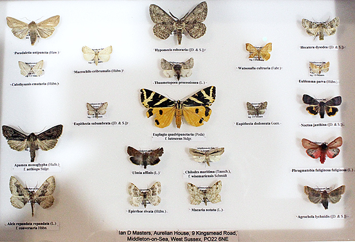Moths from West Sussex